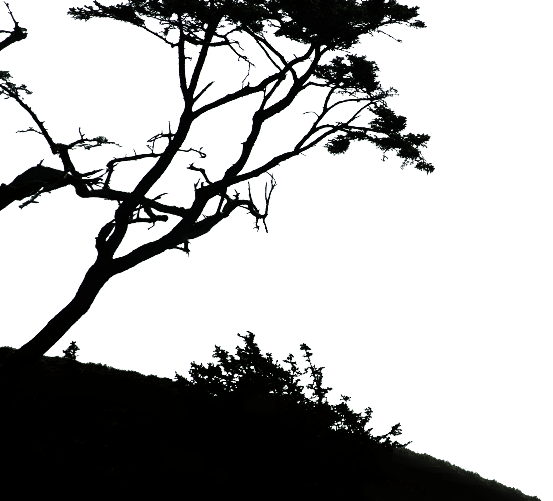 Silhouette of a tree and bush on a hill